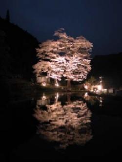 nawashiro.jpg