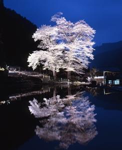 nawashiro_R