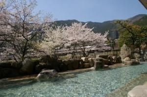 下呂温泉望川館お花見露天風呂
