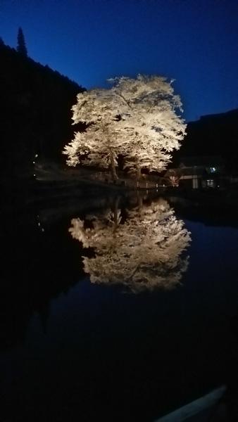 苗代桜-0202