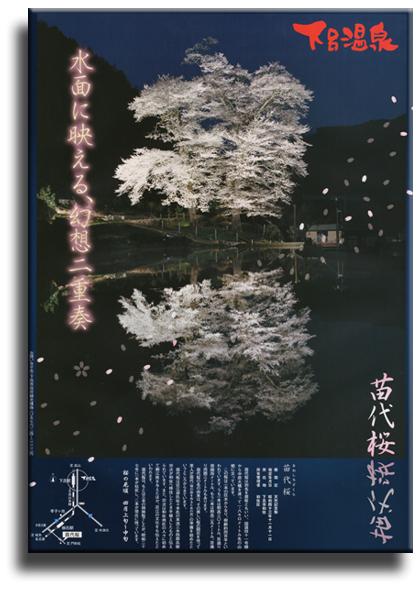苗代桜2015